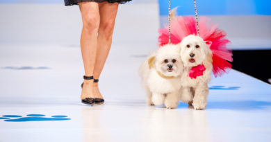 Canine Kindergarten to Host Furry Fashion Show for Paws For Purple Hearts